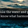Be like water and you will know what harmony is